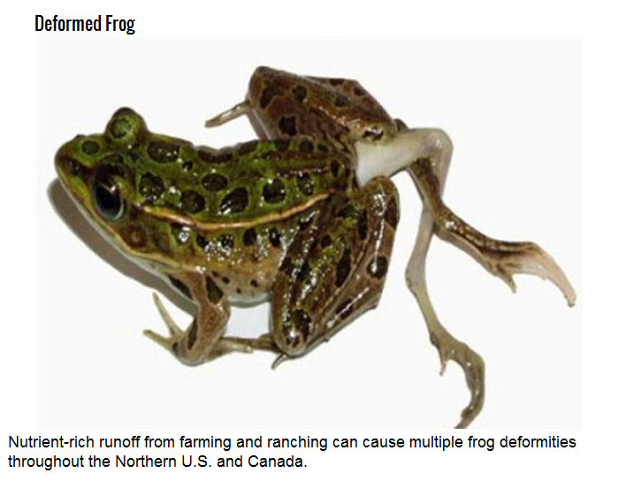 Freaks Of Nature You Didn't Know Existed