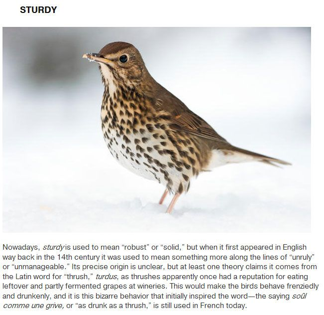Words That Originated With Animals