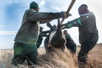 South African Rhino Gets Rescued