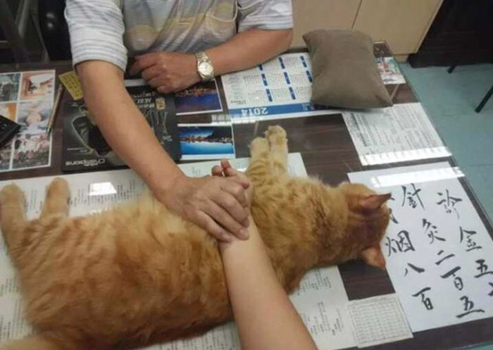 Chinese Clinic Has A Special Helper To Calm People Down