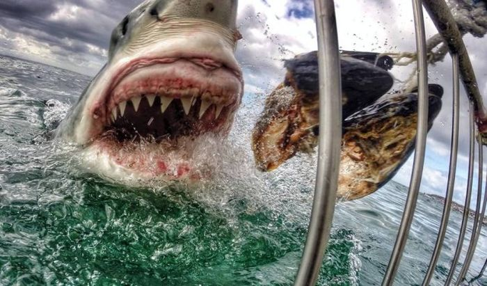 The Most Extreme Photos Of October 2014, part 2014
