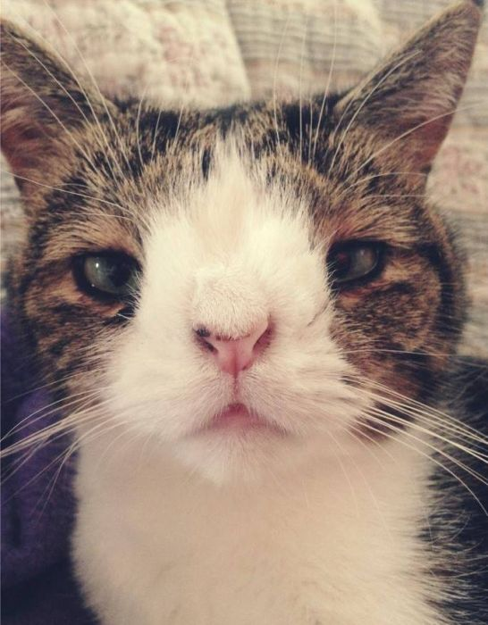 Monty The Cat's Face Is Unusual But Lovable