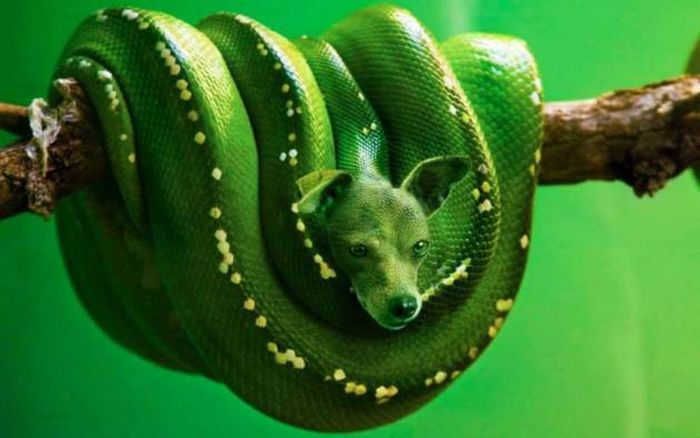 Hybrid Animals You Wish Really Existed