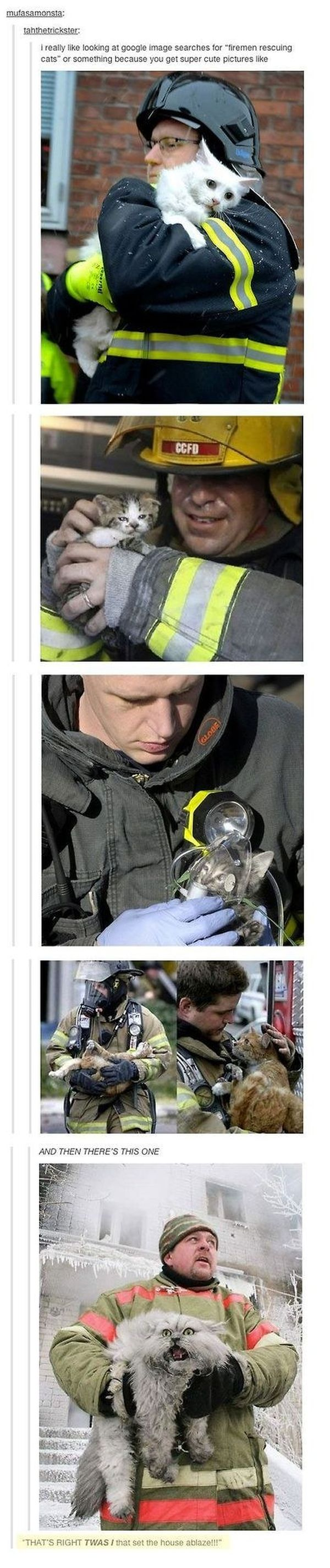 Times That Tumblr Captured The Best Cat Moments