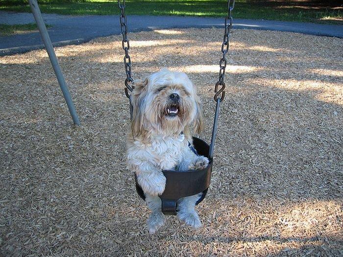 Cute swinging Dogs