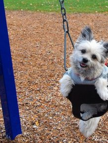 Cute swinging Dogs