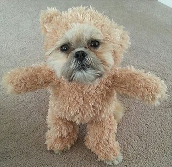 Is This A Dog Or A Teddy Bear