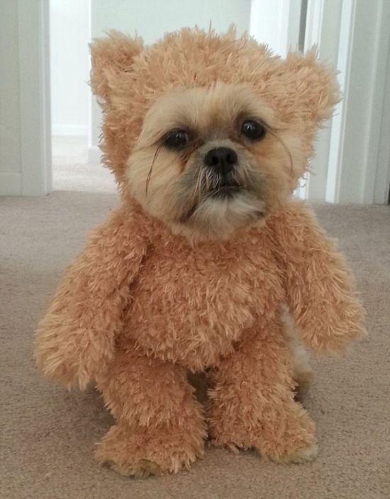 Is This A Dog Or A Teddy Bear