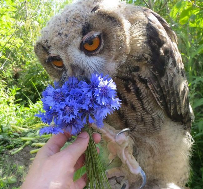 This Owl Does Not Like Having His Photo Taken