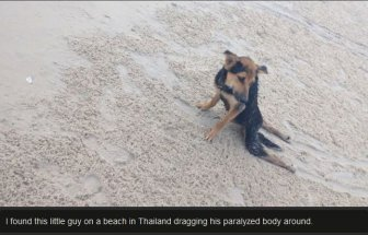 Leo The Dog Moves To Canada