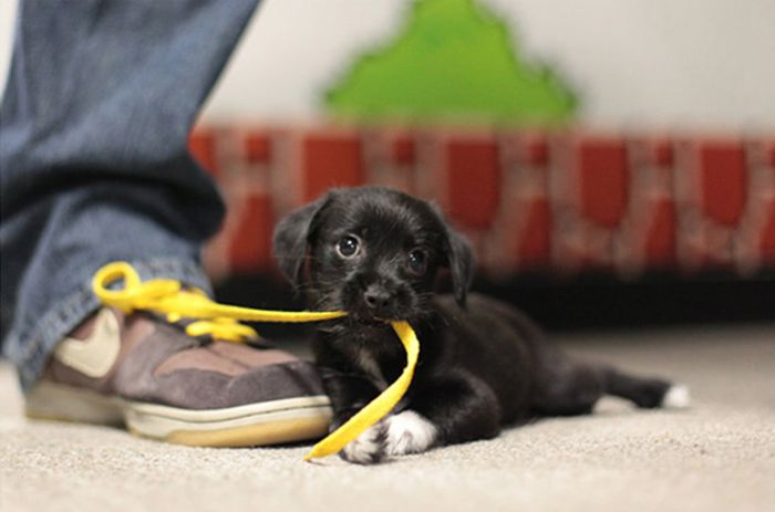 These Puppies Are Just Plain Adorable