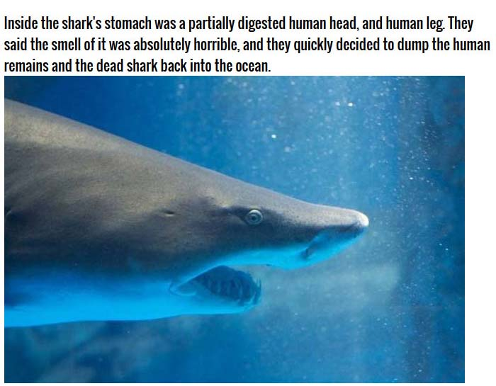 Fisherman Finds Something Shocking In The Belly Of A Shark