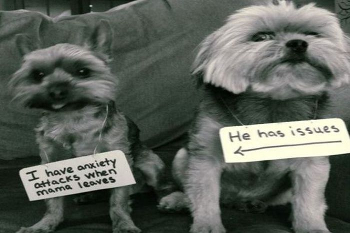 Dog Shaming Is Always Hilarious