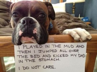 Dog Shaming Is Always Hilarious