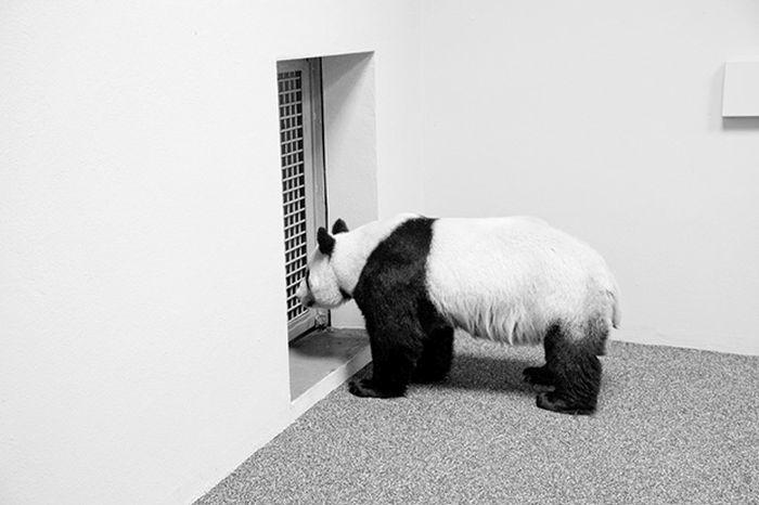 An Inside Look At Zoos From Around the World