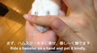 How to Make a Thin Hamster