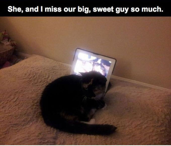 This Cat Lost Its Best Friend | Animals