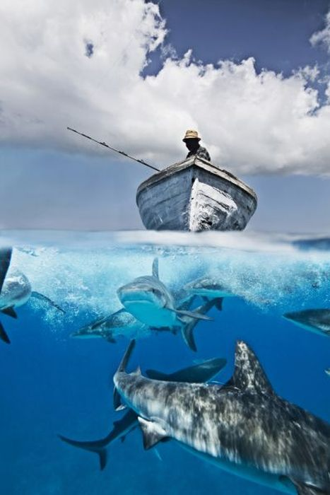 Stunning Photographs Of Life Above And Below Water Art