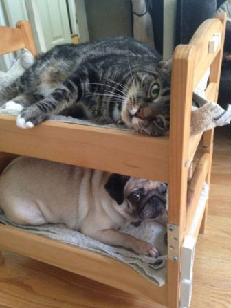 A Great Use For IKEA Doll Beds