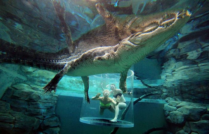 These Brave Men Came Face To Face With Crocodiles