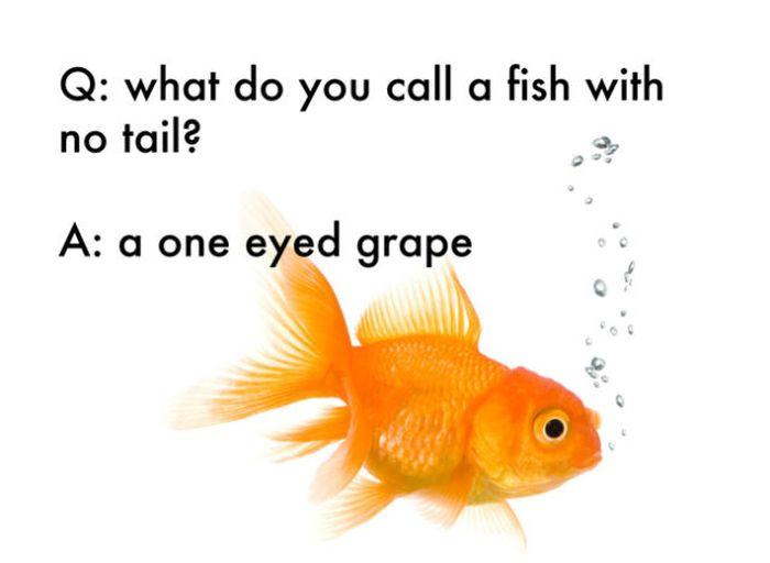 Clean Jokes For Kids Books