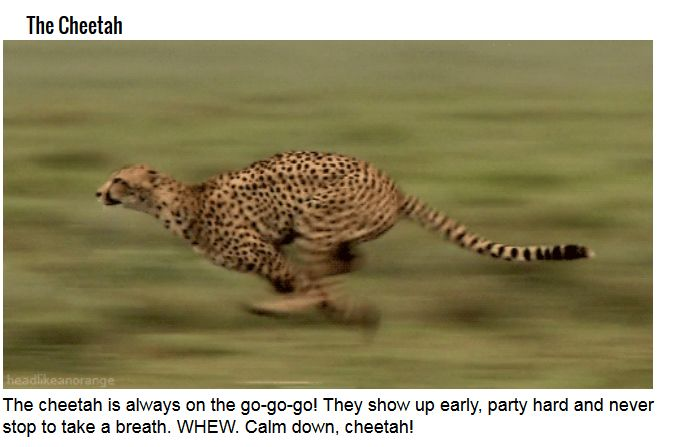 These Are Some Serious Party Animals