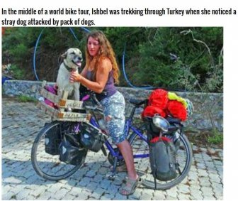 This Woman Did Something Incredible For A Stray Dog