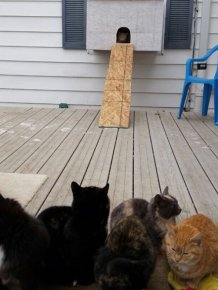 This Dad Gave Stray Cats A Place To Go On Thanksgiving