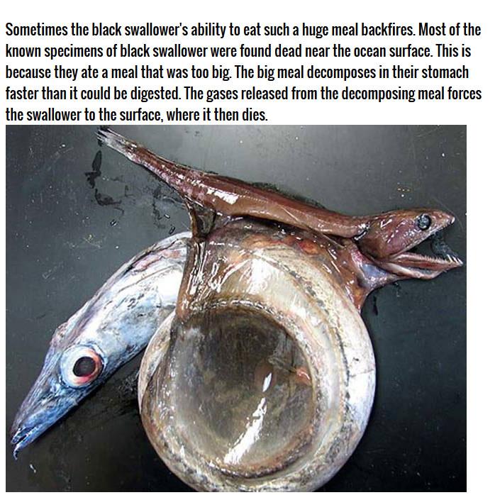 This Deep Sea Catch Is Very Impressive