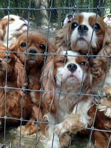 108 Abused Dogs Get Rescued From Breeding Farm