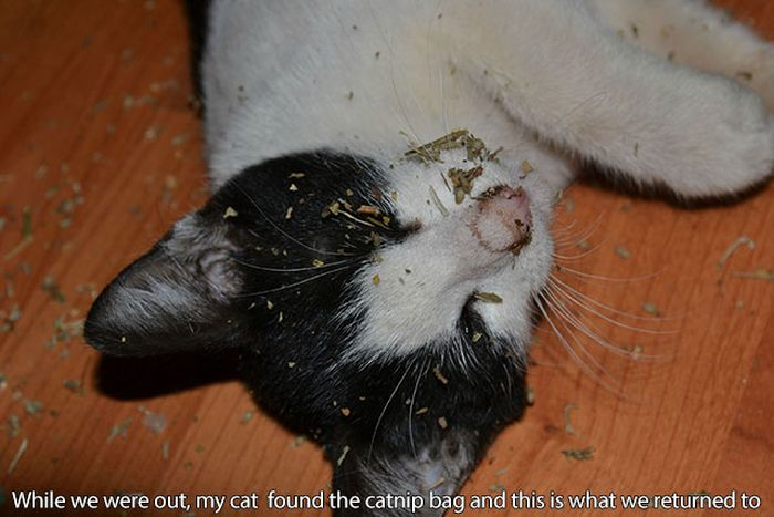 These Cats Have Taken Their Catnip Problem Way Too Far