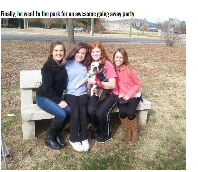 This Dying Dog Got A Farewell Party