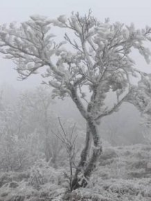 Freezing Fog Is Not Something To Mess With