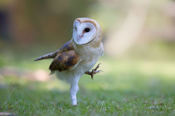 Intense Owl Moments Caught On Camera