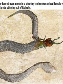 You Won't Believe What Was Found In This Snake's Stomach