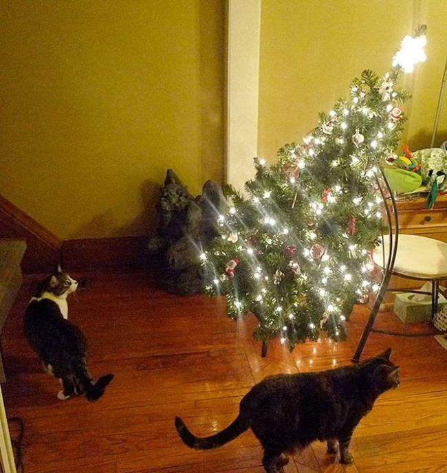 These Dogs And Cats Are Trying To Ruin Christmas