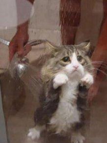 Animals taking baths