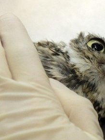 This Is What It Looks Like When An Owl Does Acupuncture