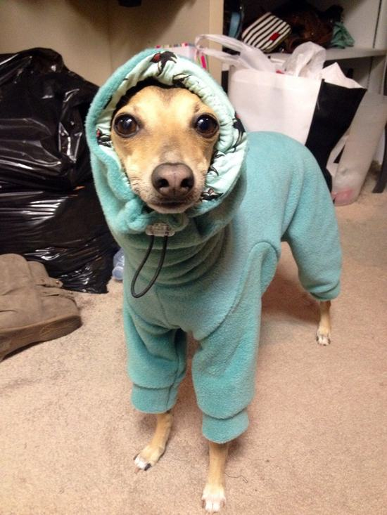 These Animals Just Want To Stay Warm This Winter