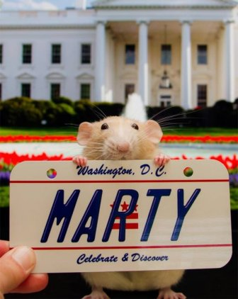Hang Out With Marty The Mouse At The Marty Mouse House