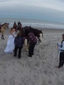 Why Adding A Horse To Your Wedding Pictures Is A Bad Idea