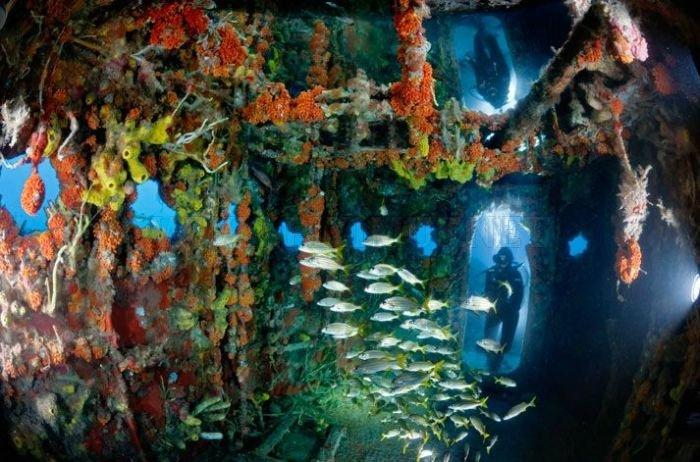 Amazing Artificial Reefs. Part 2 , part 2