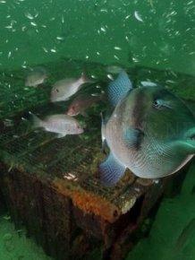 Amazing Artificial Reefs. Part 2