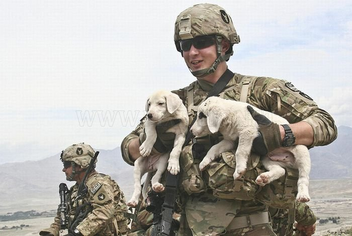Soldiers and Pets