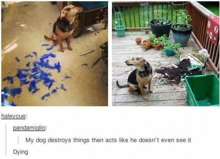 The Greatest Things Posted On Tumblr In 2014, part 2014