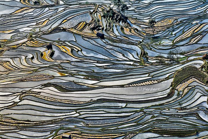 Rice Fields Look Amazing Through A Bird's Eye View