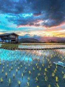 Rice Fields Look Amazing Through A Bird's Eye View