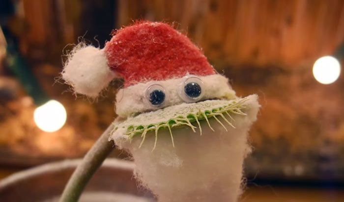 This Venus Flytrap Wants To Wish You A Merry Christmas