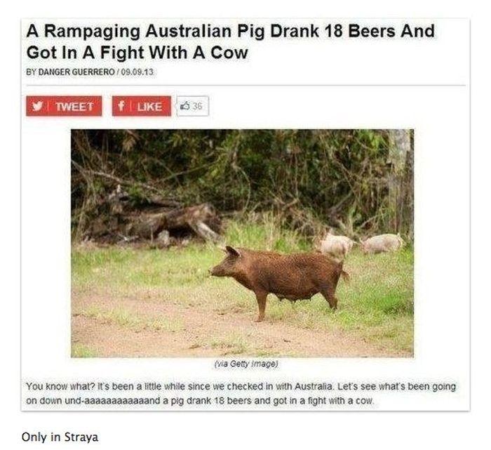 Life In Australia According To Tumblr