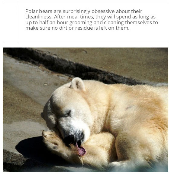 Facts You Probably Don't Know About Polar Bears